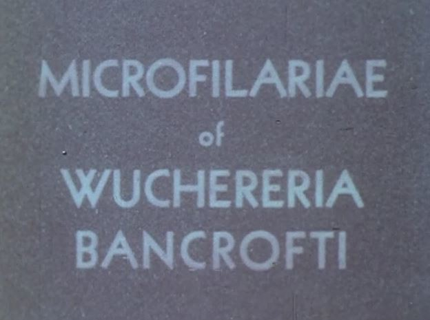 microfilarae.JPG