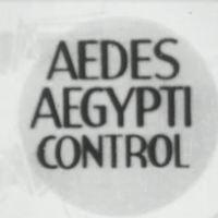 aedes aegypti control.JPG