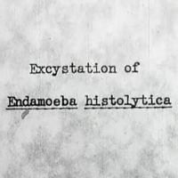 excystation of endamoeba histolytica.JPG