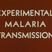 Experimental Malaria transmission.JPG
